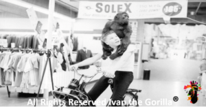 Ivan the Gorilla on the shoulders of Larry Johnston riding a Solex Bicycle